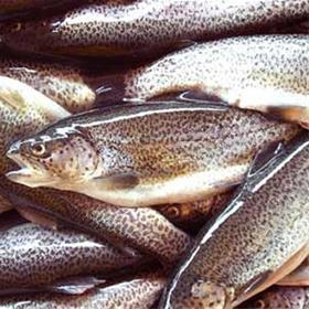 با-خواص-گوشت-ماهی-بیشتر-آشنا-شویم